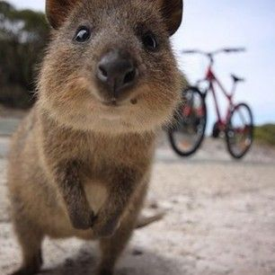quokka tour down under katy clemmans